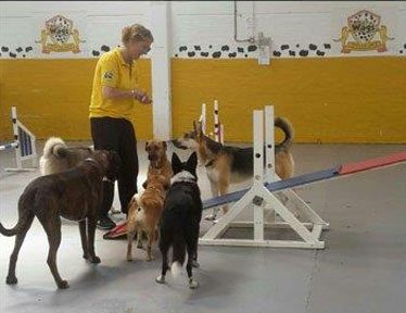 A-Z of Dog Breeds - Wags Doggy Day Care